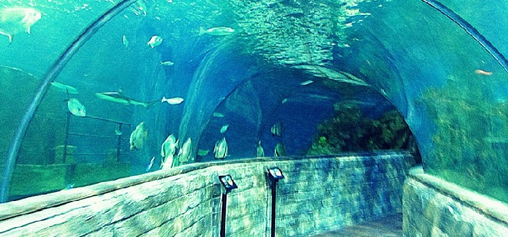 Malta's national aquarium.
